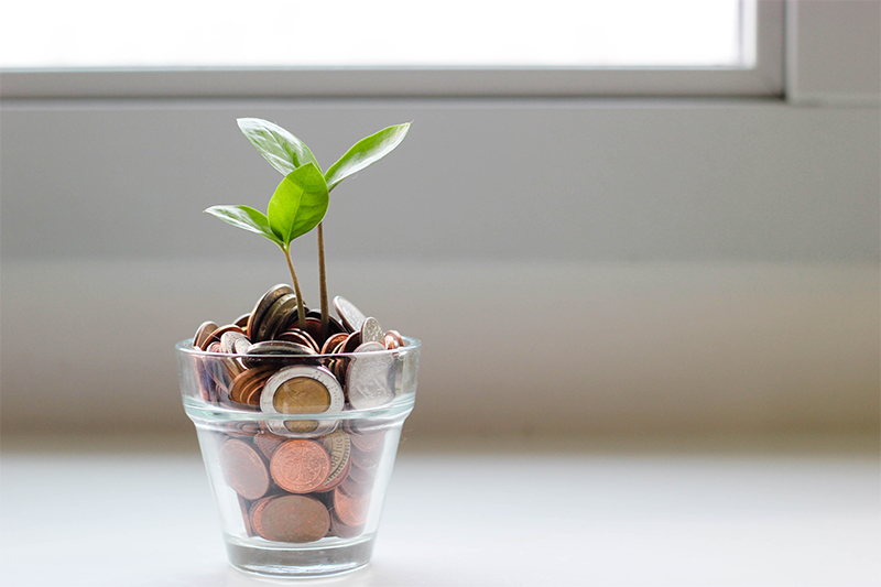 Glass cup with coins and a grean leaf starting to grow